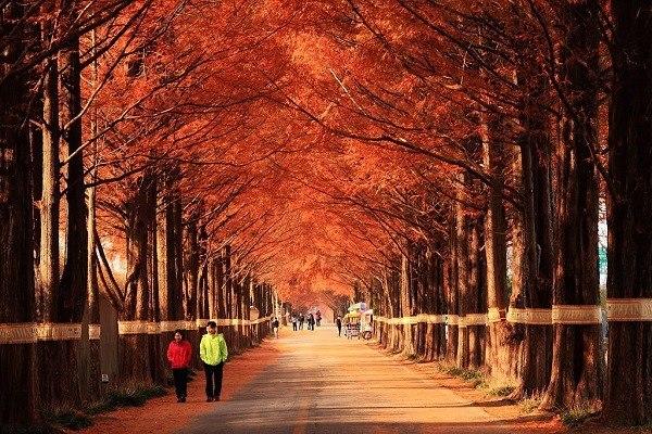 Hình ảnh đảo Nami, Hàn Quốc