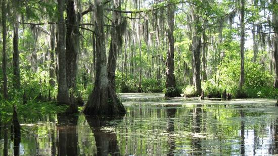 bayou-du-lich-houston