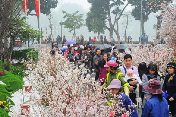 Hoa anh đào tại Bắc Ninh khoe sắc rực rỡ