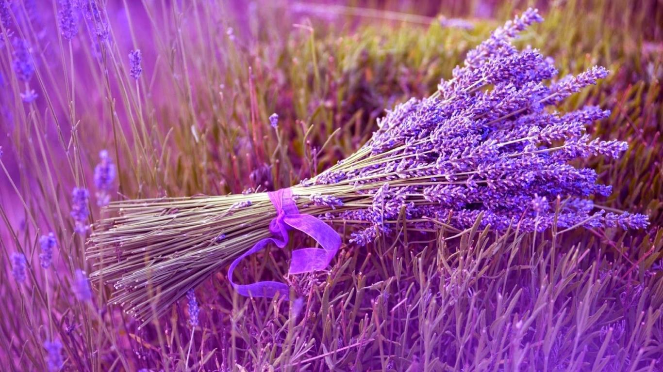 ngay ngat voi ve dep cua canh dong hoa lavender quyen ru moi du khach